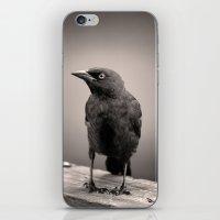 Goth Grackle iPhone & iPod Skin
