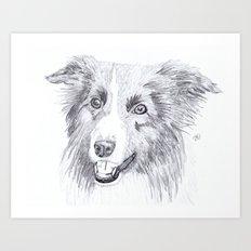 Border Collie Sketch Art Print