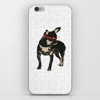 Black tan Chihuahua Dog with chick iPhone & iPod Skin