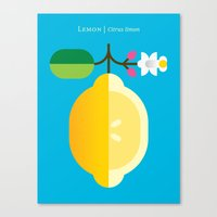 Fruit: Lemon Canvas Print