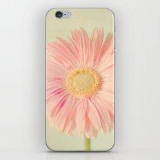 Gerbera Daisy iPhone & iPod Skin
