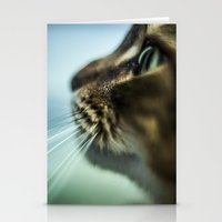 Maine Coon Close Up Stationery Cards