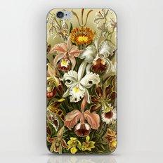 Ernst Haeckel Kunstformen der Nature Orchids iPhone & iPod Skin