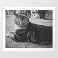 Street Kitty Art Print