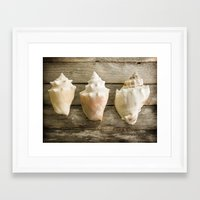 Conch Shells Framed Art Print