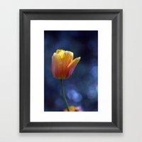 Tulip Solo 1259 Framed Art Print