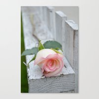 Love On The Fence Canvas Print
