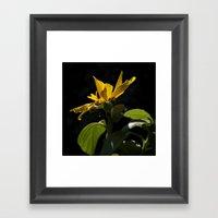 Rogue Sunflower 2 Framed Art Print