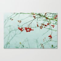 Canvas Print featuring Winter Berries by Lawson Images
