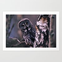 INQUISITIVE GREAT GREY OWL Art Print