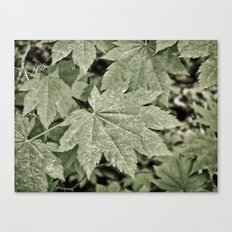 Leaves on the Misty Mountain Top. Canvas Print