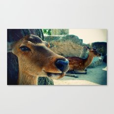 Multiple Deer is called Deer Canvas Print