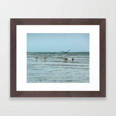Water Fowl Framed Art Print