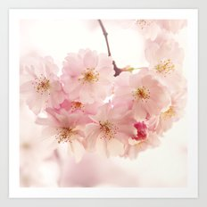 cherry blossoms- In memory Art Print