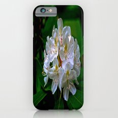 Rhododendron Bloom at Falling Water Slim Case iPhone 6s