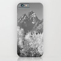 iPhone & iPod Case featuring White Trees by lokiandmephotography