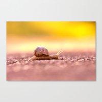 Snail shell Design Canvas Print