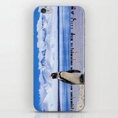 Penguin colony iPhone & iPod Skin