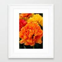 Open Tulip Framed Art Print