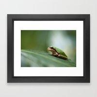 Mediterranean Tree Frog … Framed Art Print