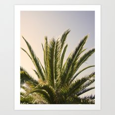 Palm Tree Series 03 Art Print