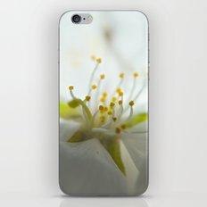 Whimsy Bloom iPhone & iPod Skin