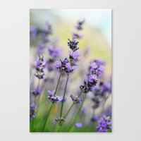 Lavendream Canvas Print