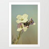 Cuckoo Flower 2 Art Print