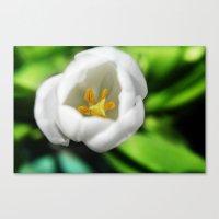 Tulip Stamen Canvas Print