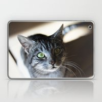 Curious Cat Laptop & iPad Skin