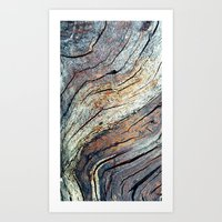 The Colours of the Trees Art Print