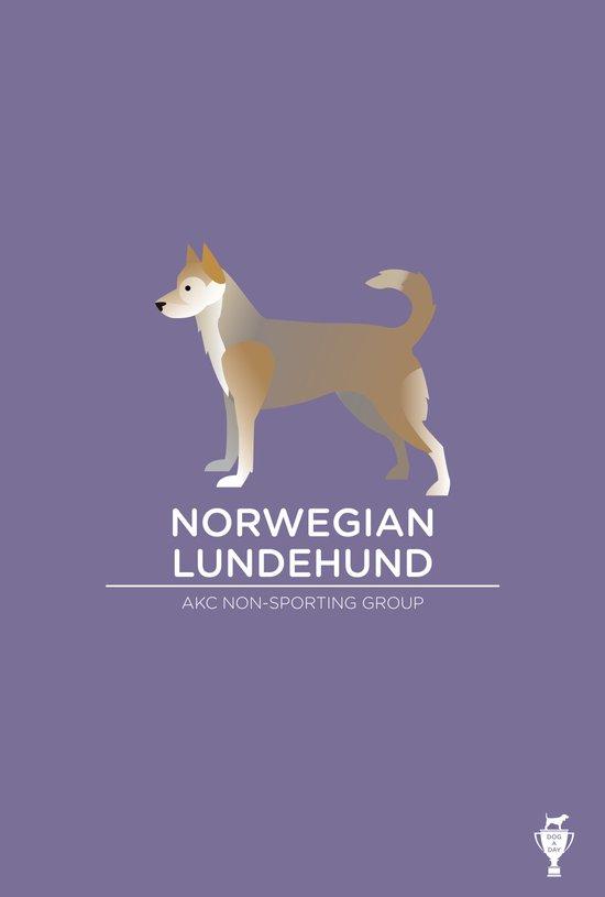 Norwegian Lundehund Art Print