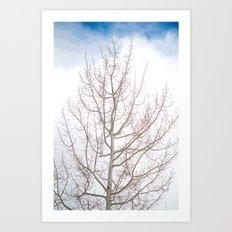 Winter Tree Art Print
