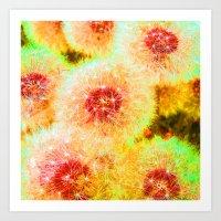 Dandelions Abstract IX Art Print