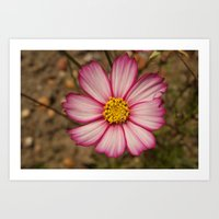 Flower With Red-Rimmed W… Art Print