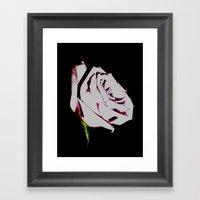 Lavender Rose Framed Art Print