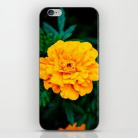 Tangerine Beauty iPhone & iPod Skin