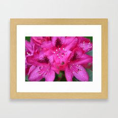 Flowers from Paradise Framed Art Print