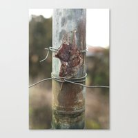 Solitary  Canvas Print