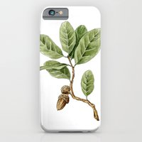 iPhone & iPod Case featuring Live Oak by TheColorK