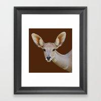 Lesser  Kudu Female Framed Art Print