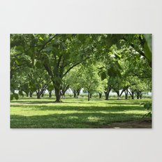 Peach and Pecan Orchard Canvas Print