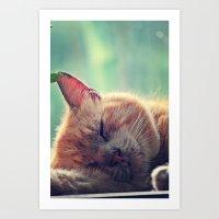 Here Kittyyyy Kittyy Art Print