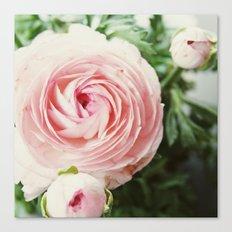 Pink Ruffles Canvas Print