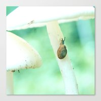 Snail Crossing Canvas Print