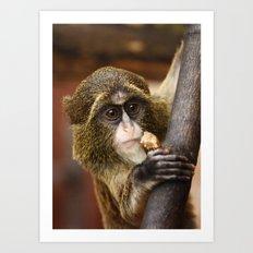 Young Debrazza's Monkey  Art Print