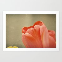 Orange Tulip Art Print