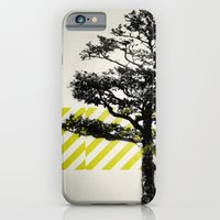 iPhone & iPod Case featuring Ulmus parvifolia (Defying the Odds) by Piccolo Takes All