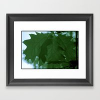 The Mighty Red Oak! Framed Art Print
