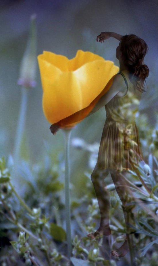 Flower Fairies Art Print